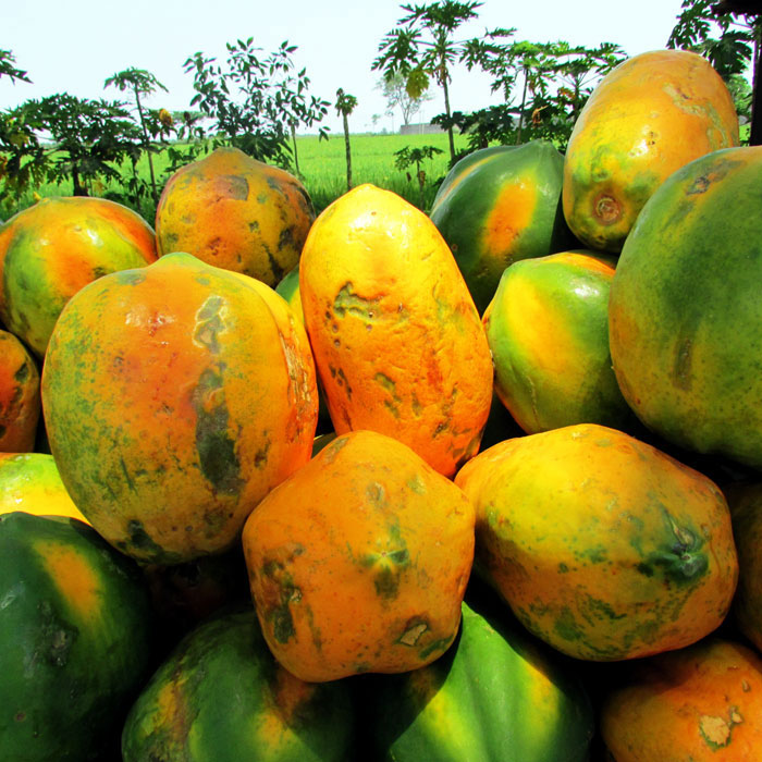 Papaya Nutrition | Papaya Benefits | Health Benefits of Papaya