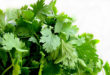 Coriander | Health Benefit of Coriander