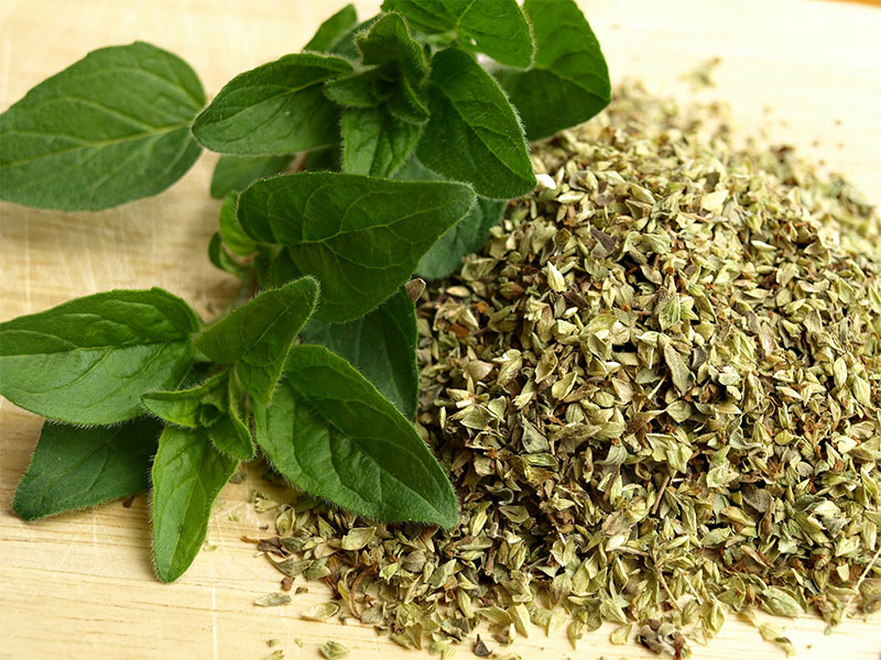 Oregano leaves | Health Benefits of Oregano
