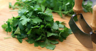 Parsley | Health benefits and Side effect of parsley