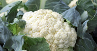 7 Health Benefits of Cauliflower | Gardeninfograph