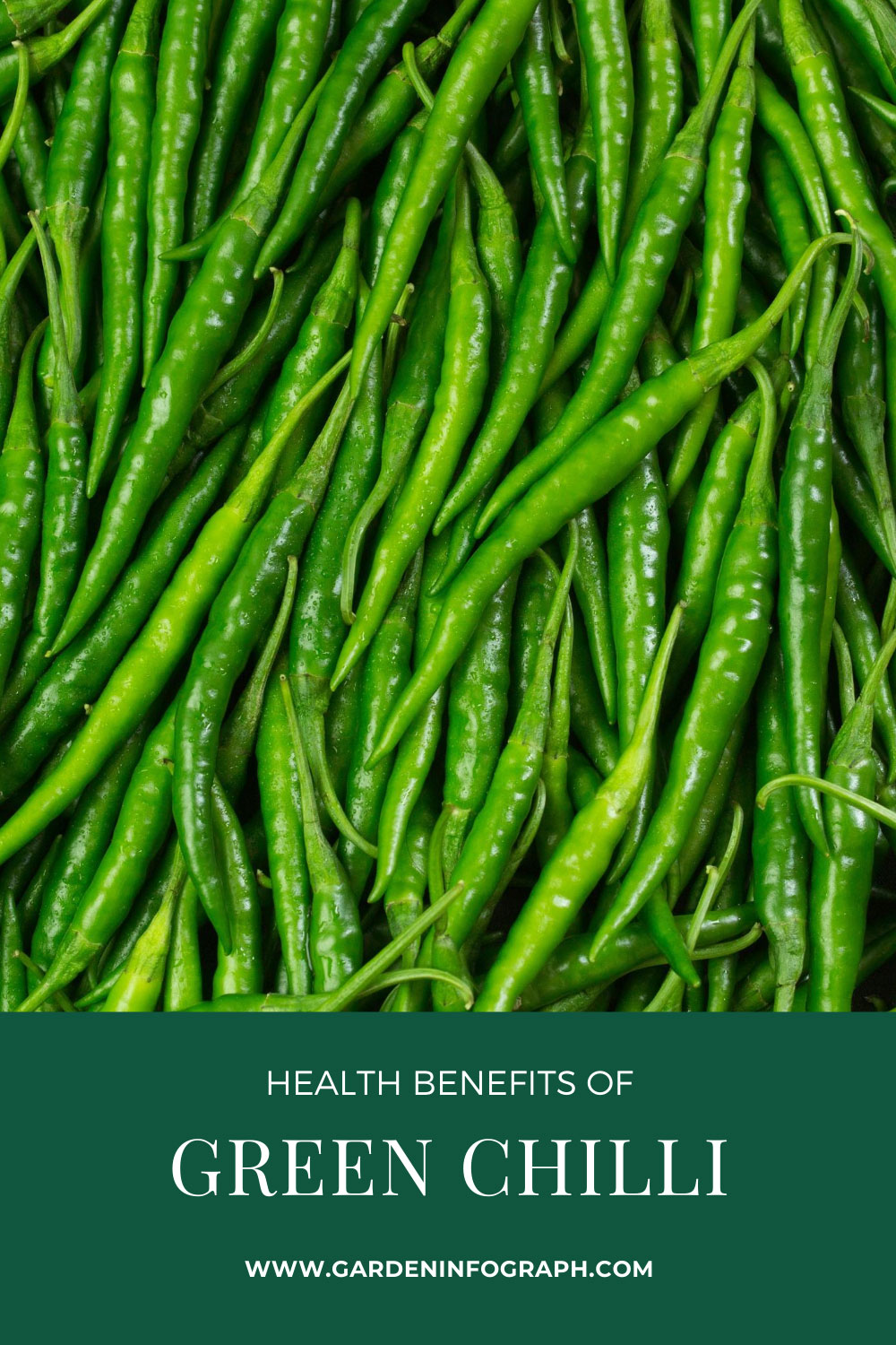 Health Benefits of Green Chilli | Side effects of green Chili | Gardeninfograph