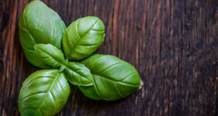 4 Health Benefits of Basil | Ayurveda