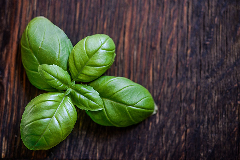 4 Health Benefits of Basil | Ayurveda