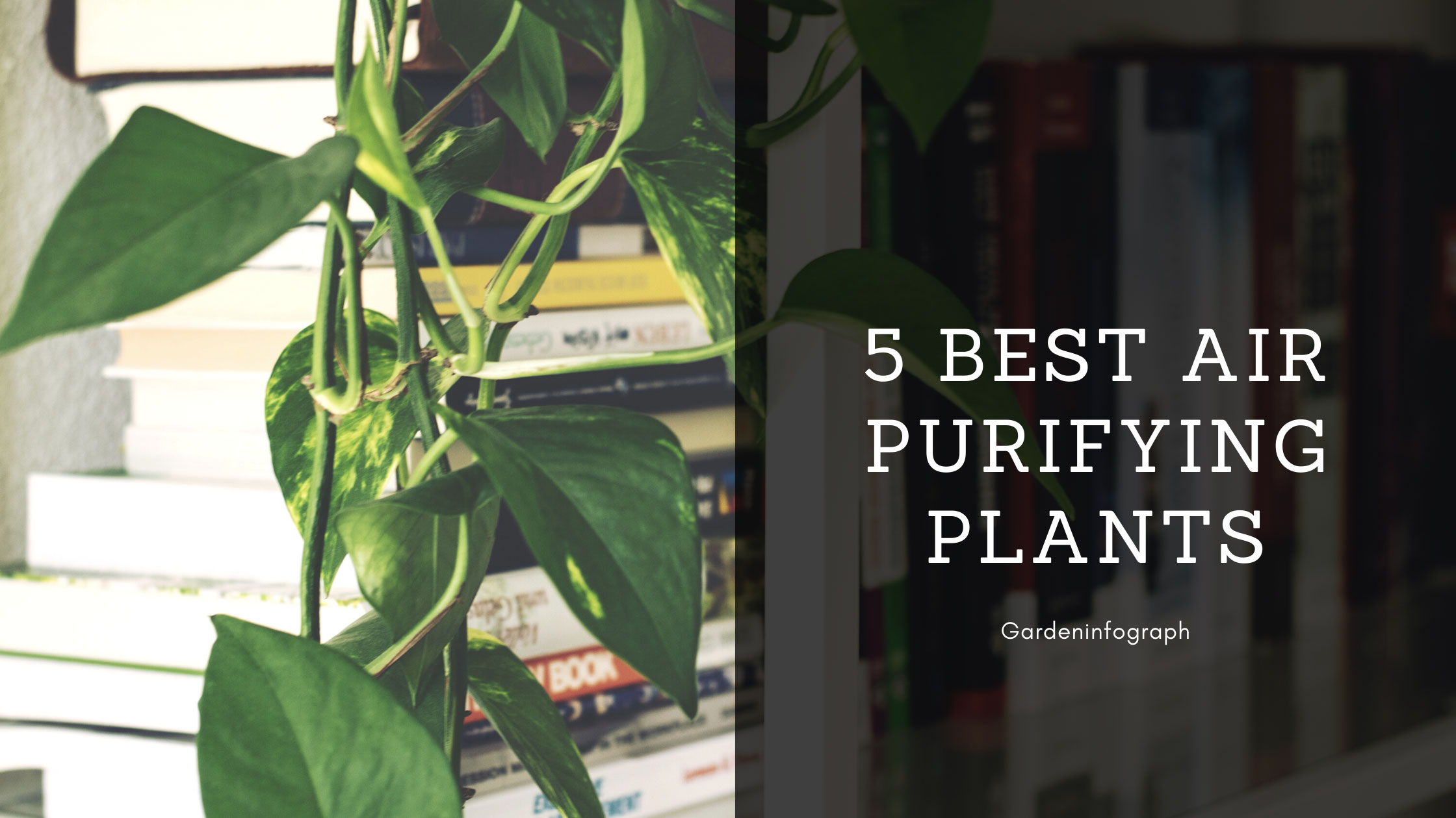 5 Best Air Purifying plants indoor | Indoor plants