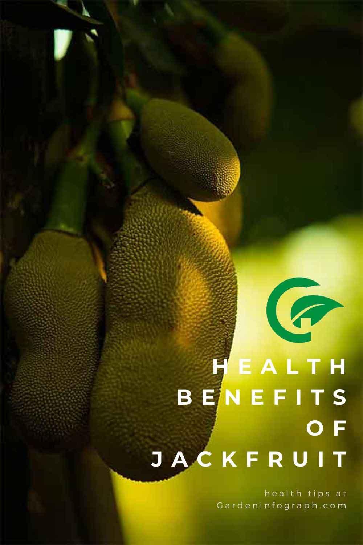 jackfruit health benefits