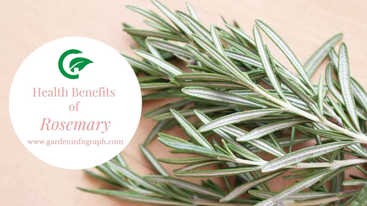 Rosemary: Health benefits and Side effects